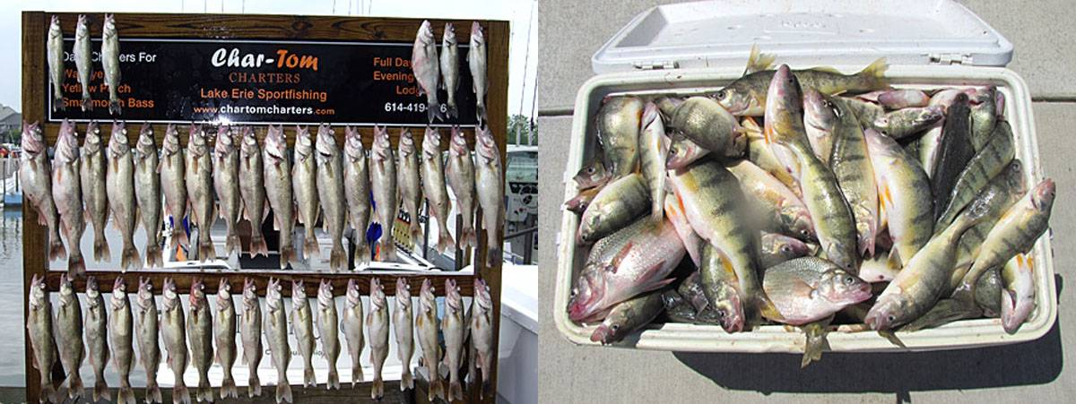 Char tom sport fishing charters put in bay online for Put in bay fishing charter