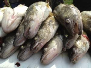 fishing03
